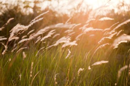 Grass flower field Stock Photo