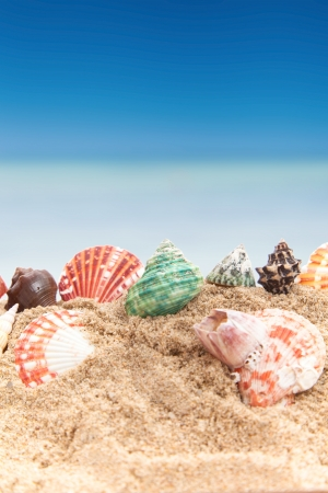 Shell on sea background photo