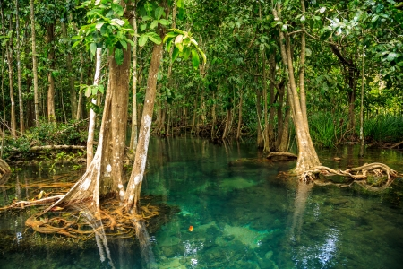 thapom: Inland waters Thapom Klong Song Nam, Krabi, Old mangrove forest Thailand