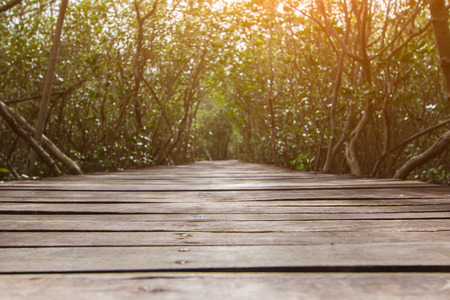 Tree tunnel with walkway, The Wooden Bridge In Mangrove Forest at Laem Phak Bia, Phetchaburi, Thailand Banco de Imagens - 86202223