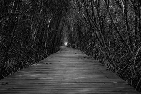 Black and White Tree tunnel with walkway, The Wooden Bridge In Mangrove Forest at Laem Phak Bia, Phetchaburi, Thailand Banco de Imagens - 86502213