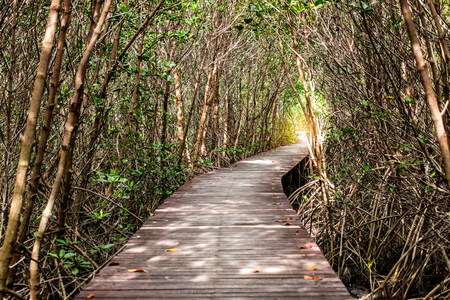 Tree tunnel with walkway, The Wooden Bridge In Mangrove Forest at Laem Phak Bia, Phetchaburi, Thailand Banco de Imagens
