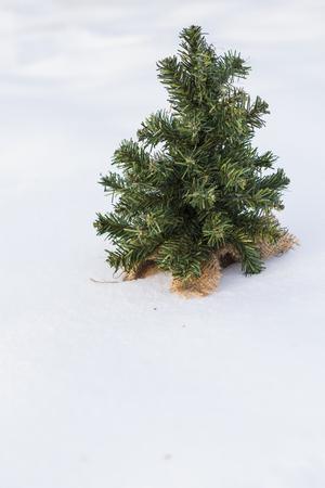 Winter tree in snow Фото со стока