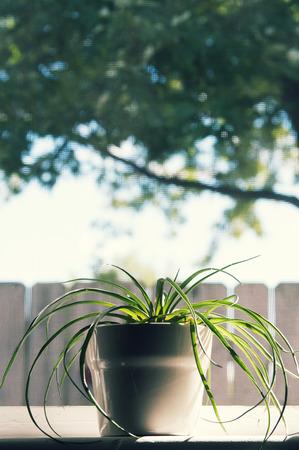 Plant pot in window
