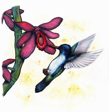 meaningful: flying hummingbird and orchid Stock Photo