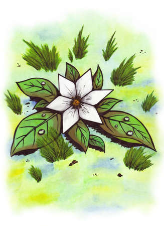 abstract symbolism: white star shaped flower in green grass