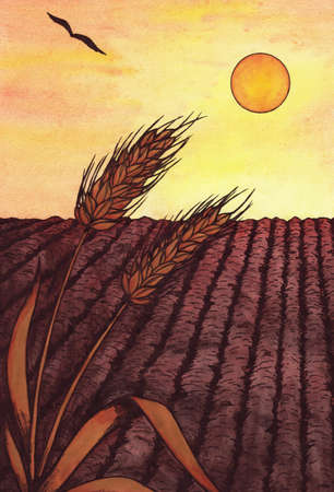 meaningful: Two wheat ears on a field while sunset Stock Photo