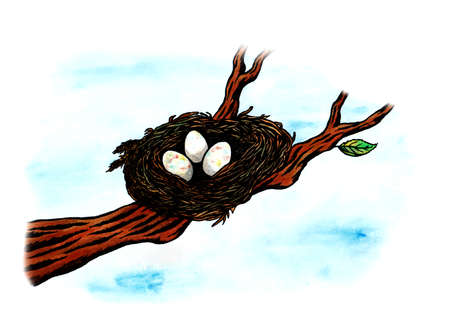 meaningful: A birds nest with three eggs inside on a branch