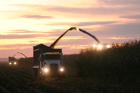 Corn Harvest at Sunset