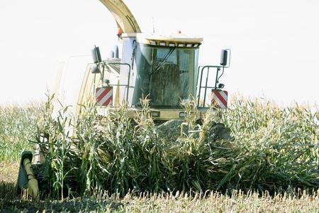 Corn Chopper photo