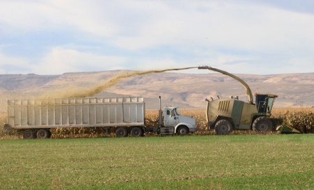 Chopped Corn Shooting Into Harvest Truck Imagens