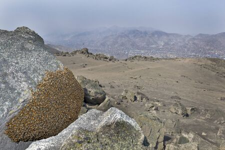 Bee honeycomb (Apis mellifera) found on the top of a hill over the city of Lima in the district of San Juan de Lurigancho Stock Photo