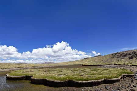 Andean vegetation subjected to water stress due to climate change and slow desertification Imagens