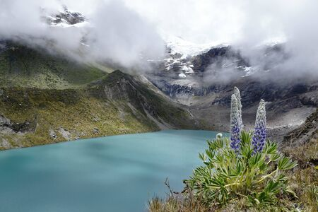 Andean landscape with lagoon and andean plant (lupinus weberbaueri) Banco de Imagens