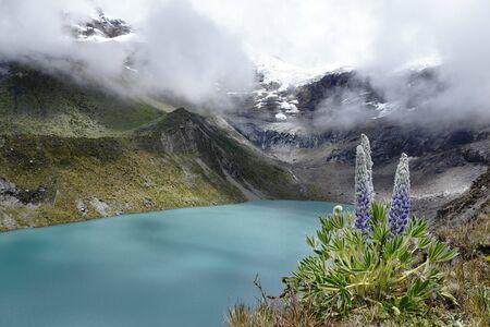 Andenlandschaft mit Lagune und Andenpflanze (Lupinus weberbaueri) Standard-Bild