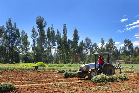 Chupaca. May 01, 2016 - Agricultural machinery doing work by turning the soil to remove the crop 新聞圖片