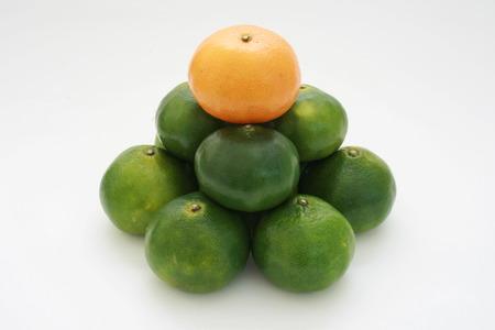 citrus fruit pyramid with the orange ponkan on top