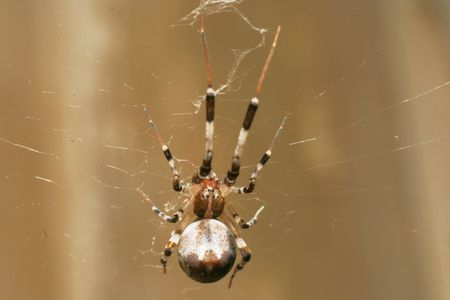 big and scary brown spider on a cob web