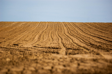 seeding: corn field