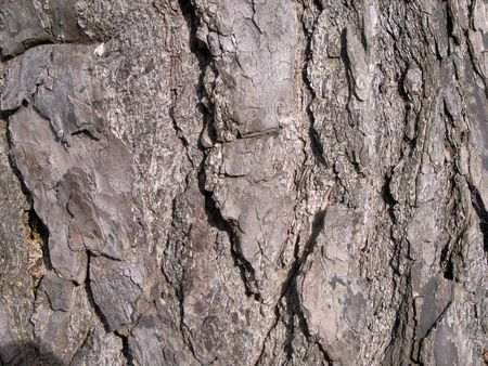 scots: Scots pine rough textured tree bark  Stock Photo