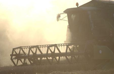 combine harvester: Cosechadora trilla de trigo en una nube de polvo.