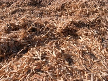 hydrocarbon: Clean new wood shavings drying in the sun