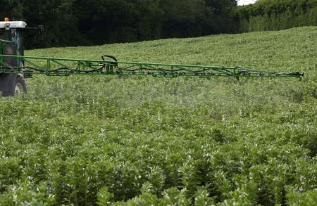 Insecticide spraying of a field of green winter beans. photo