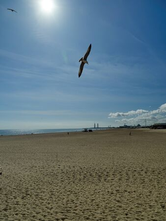 Seagull flying over Great Yarmouth beach nearly empty on sunny day with wind farm part parts in the background. Banco de Imagens