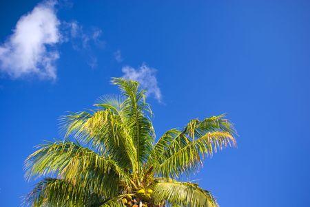 Coconut Palm Tree Top en Bright Blue Sky Stockfoto