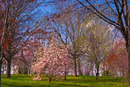 Springtime Grassy Hillside with Castle and Blooming Trees Stok Fotoğraf