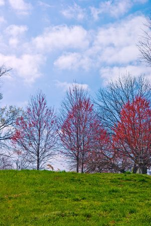 Springtime Grassy Hillside with Red Maple Trees Stok Fotoğraf