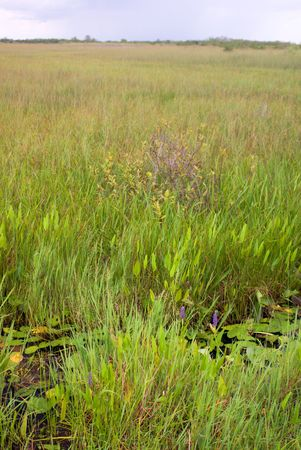 Everglades Canal and Grass Landscape, Anhinga Trail, Everglades National Park