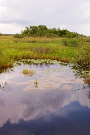 Everglades Canal Landscape, Anhinga Trail, Everglades National Park photo