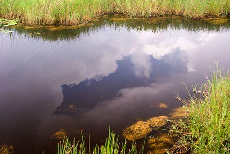 Everglades Canal Landscape, Anhinga Trail, Everglades National Park