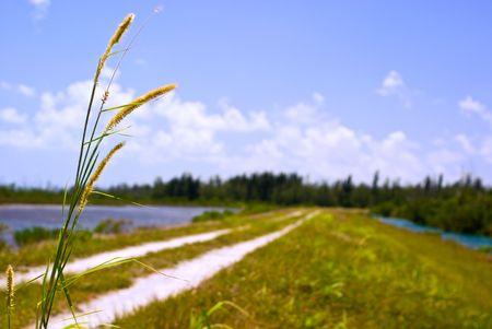 Florida Canal Levee and Wetland Under Blue Sky Stok Fotoğraf