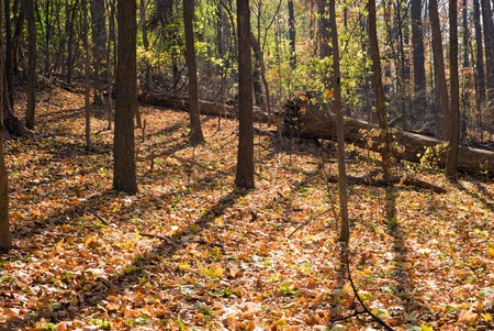 Backlit Autumn Forest with Colorful Blanket of Fallen Leaves  Stok Fotoğraf