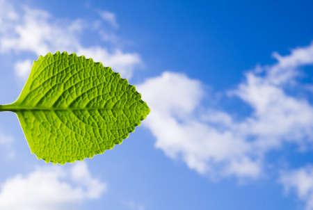 Leaf isolated on blue sky with clouds background ecology concept copy space Banque d'images