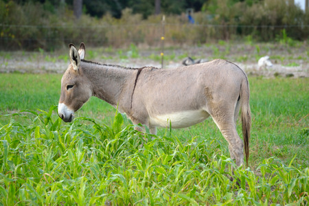 Daim Ezel in Rye Grass