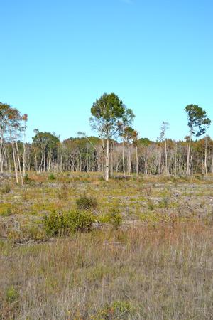 Onlangs Cutover Timberland