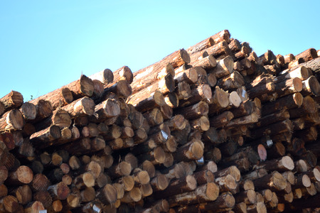 lumber mill: Stacked Logs Ready at Lumber Mill Stock Photo
