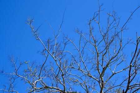 limbs: Bare Tree Limbs