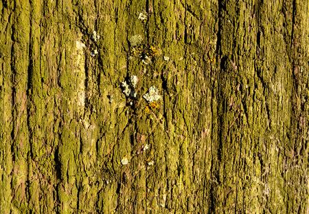 railroad tie: Green Railroad Tie Fence Post Close up