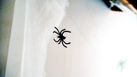 spiders and cobwebs scattered around the house during halloween night