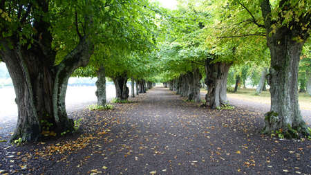 A long tree-lined avenue with old trees