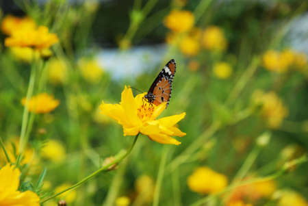 stay in the green: Butterfly stay on yellow flower
