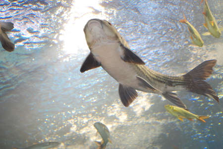 salt water fish: Salt Water Fish in Tank