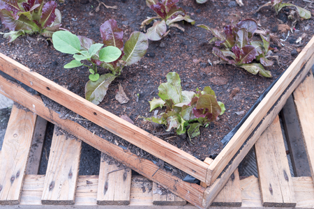 Community Hydroponic vegetable garden boxes