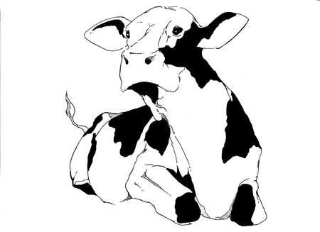 lying down: Cow Lying down Stock Photo