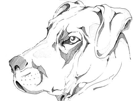 pencil drawings: Dog face Stock Photo