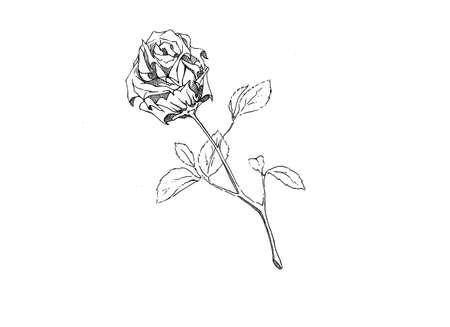 date night: Rose